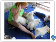 Nancy_and_Puppies1
